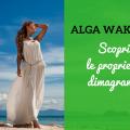 Wakame Slim Alga Dimagrante